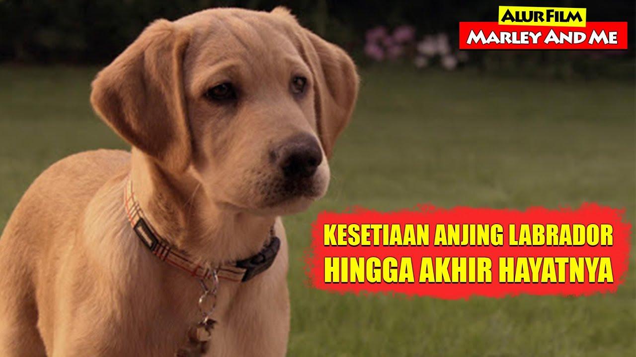 Download Kisah Kesetiaan Anjing Labrador Hingga Akhir Hayatnya   Alur Cerita Film MARLEY & ME (2008)