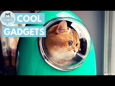 10 Useful Gadgets For Cats