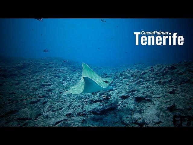 Tenerife CuevaPalmar Scubamarine FFPro