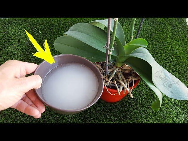 Úsalo en tus plantas y crecerán más rápido (Abono casero revitalizante)