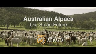 Why Alpaca is the Smart Future for Australia