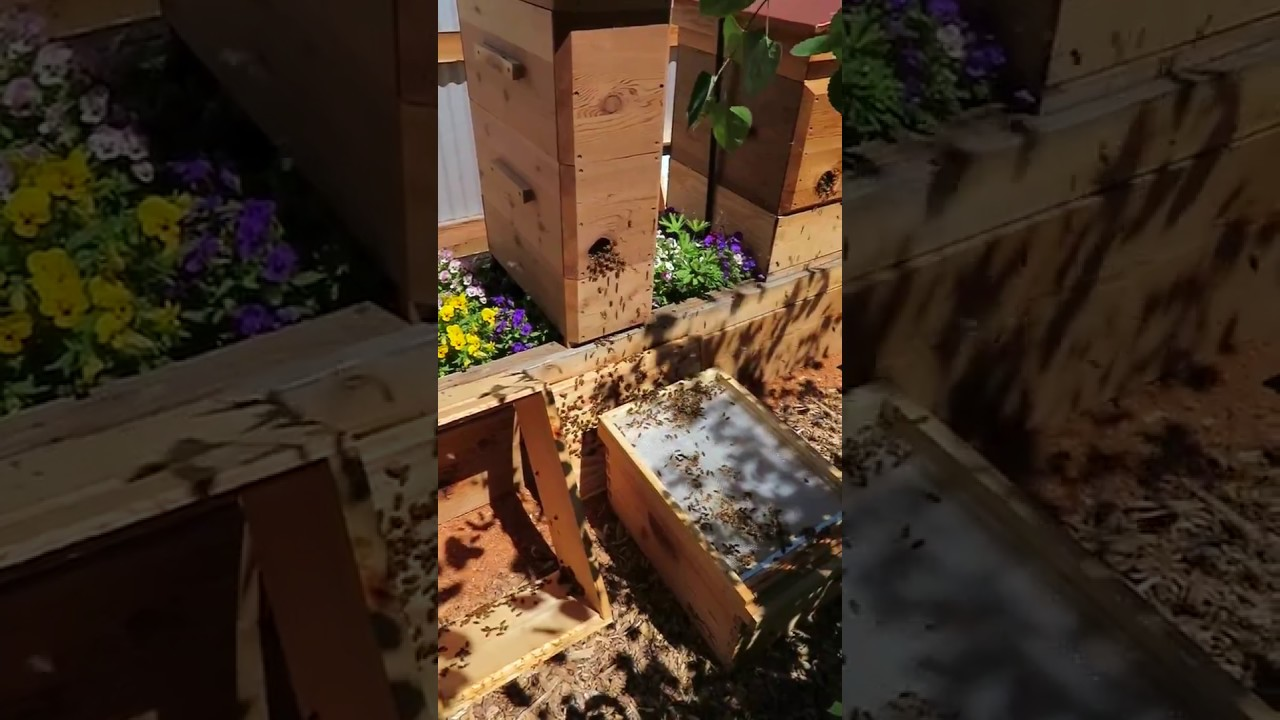 A Complete Preservation Hive