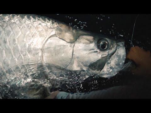 Guidelines - Night Fishing For Tarpon