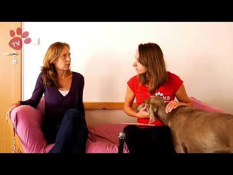 Tlapka TV - Separační úzkost - První díl