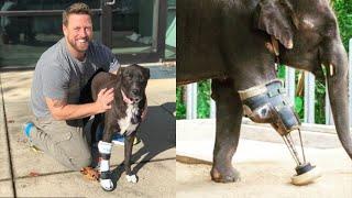 Ha salvato oltre 20mila animali con le sue protesi su misura: una missione d'amore