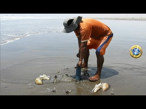 See how to get sea ghost shrimp