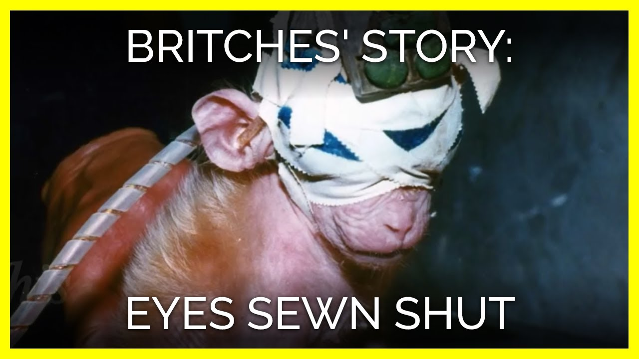 britches story eyes sewn shut
