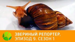 Звериный репортер  Эпизод 9  Сезон 1