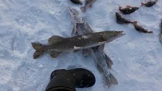 Рыбалка на озере Шаглытениз Северный Казахстан Щука и окунь на жерлицы щука окунь рыбалкаско