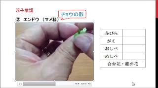 花のつくりと分類②・・・代表的な○○科