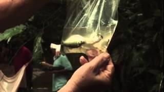 Expidición Parque Nacional Natural  Paramillo Vídeo N° 2
