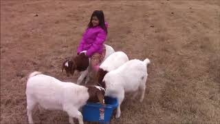 HOW TO RIDE A GOAT - The Little-Peppers Goat Rider Video