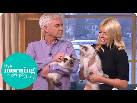 Holly Brings in Her Adorable Kittens for Some Cat Training | This Morning