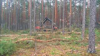 Harvester Valmet wycinka drzew