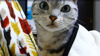 可愛い子猫とイチャついてたのがバレて…まさかの裏切りに激怒した猫 ~母ちゃんの帰りが遅いから心配してたのに!!! -Cat burning with jealousy with cute kitten