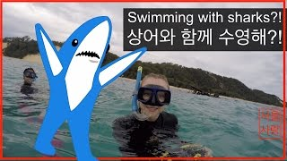 Swimming with SHARKS??!!