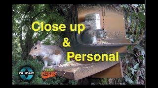 Close Up Squirrel Control