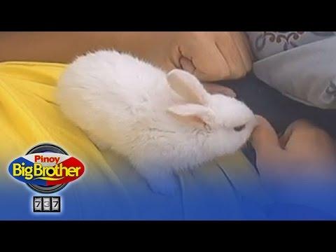 Housemates, dinalaw ng mga cute rabbits sa bahay