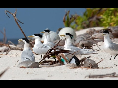 British Indian Ocean Territory – seabirds