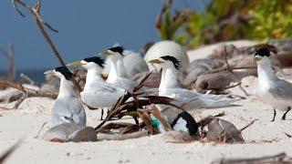 British Indian Ocean Territory – seabirds