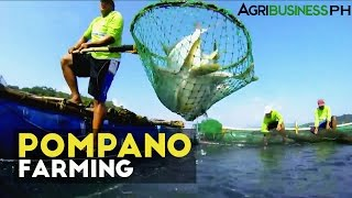 Pompano Aqua Farming- Agribusiness Season 1 Episode 4 Part 3
