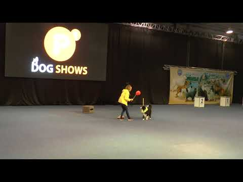 Caesar ~ Border Collie | 2018 - Grand Prix Dog Dancing Competition