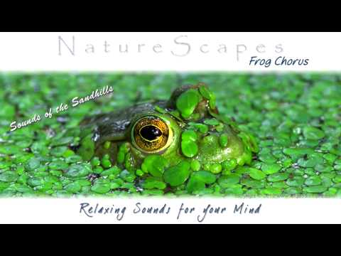 🎧 RELAXING SOUNDS OF FROGS... One Hour of Soothing, Meditative Sounds of Nature