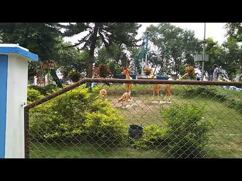 Jangipur subhashdip park