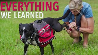 Everything I Learned From Backpacking With a Dog