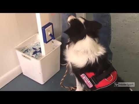 The Light Switch and Stitch the Service Dog