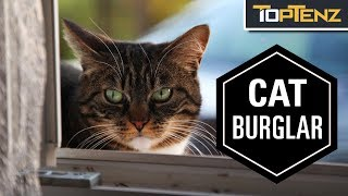 10 Times Cats Were Blamed for Crimes
