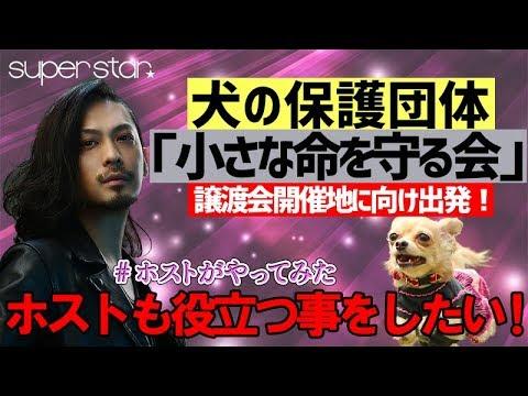 保護 犬 町田