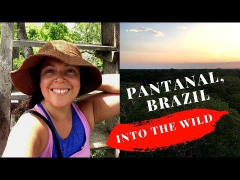 Pantanal, Brazil: Into the Wild