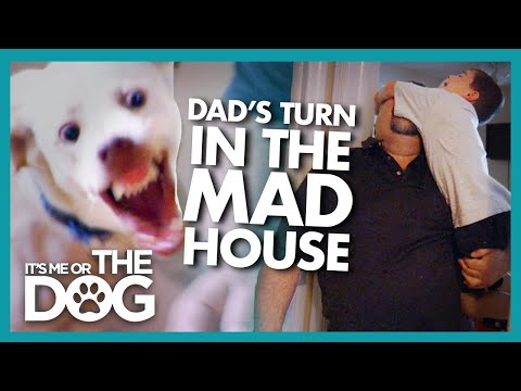 Father Needs to Prove he Can Pull his Weight | It's Me or the Dog