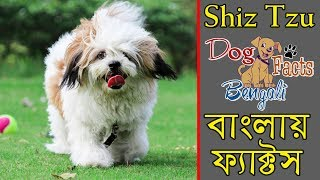 Shiz Tzu dog Facts In Bengali | Popular Dogs | Dog and Facts | Dog facts bengali