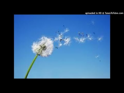 Blowing in the wind (cover)