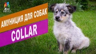 Амуниция для собак Collar | Обзор амуниция для собак Collar