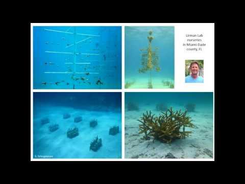 Intervention Strategies in Reef Restoration, Andrew Baker, University of Miami