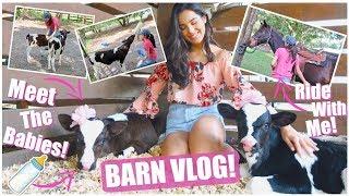 """Meet Our New Bottle Calves!   """"BUSY"""" Barn Vlog!"""