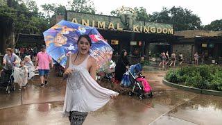 🔴 LIVE:  A rainy evening at Disney's Animal Kingdom! 🌳🍃⛈👀 thumbnail