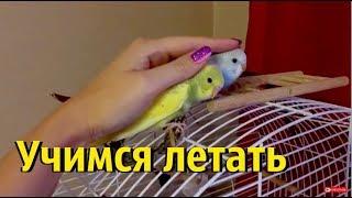 Пора снимать гнездо у попугаев? Малыш не умеет летать!