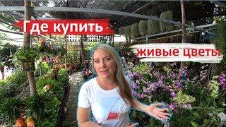 пАТТАЙЯ. Где купить ОРХИДЕИ, ЖИВЫЕ цветы и СЕМЕНА. Красивые места для фото