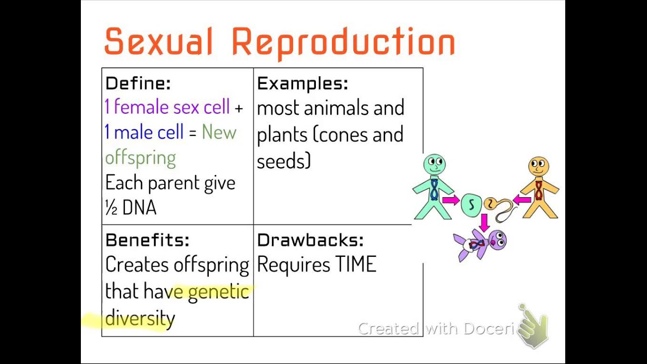 What are some similarities of asexual and sexual reproduction