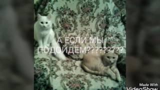 Кошки против собак(часть 1)