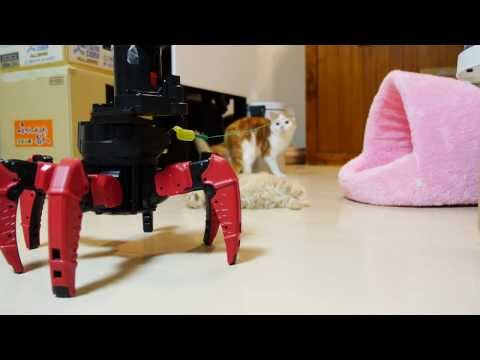 Cat And Kittens Meet Robot Toy