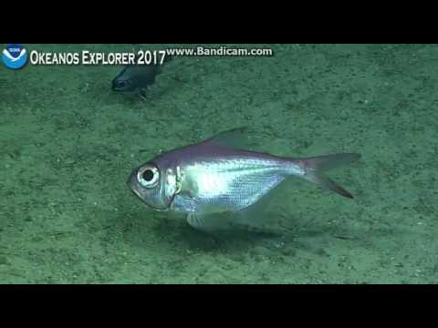 Okeanos Dive 7