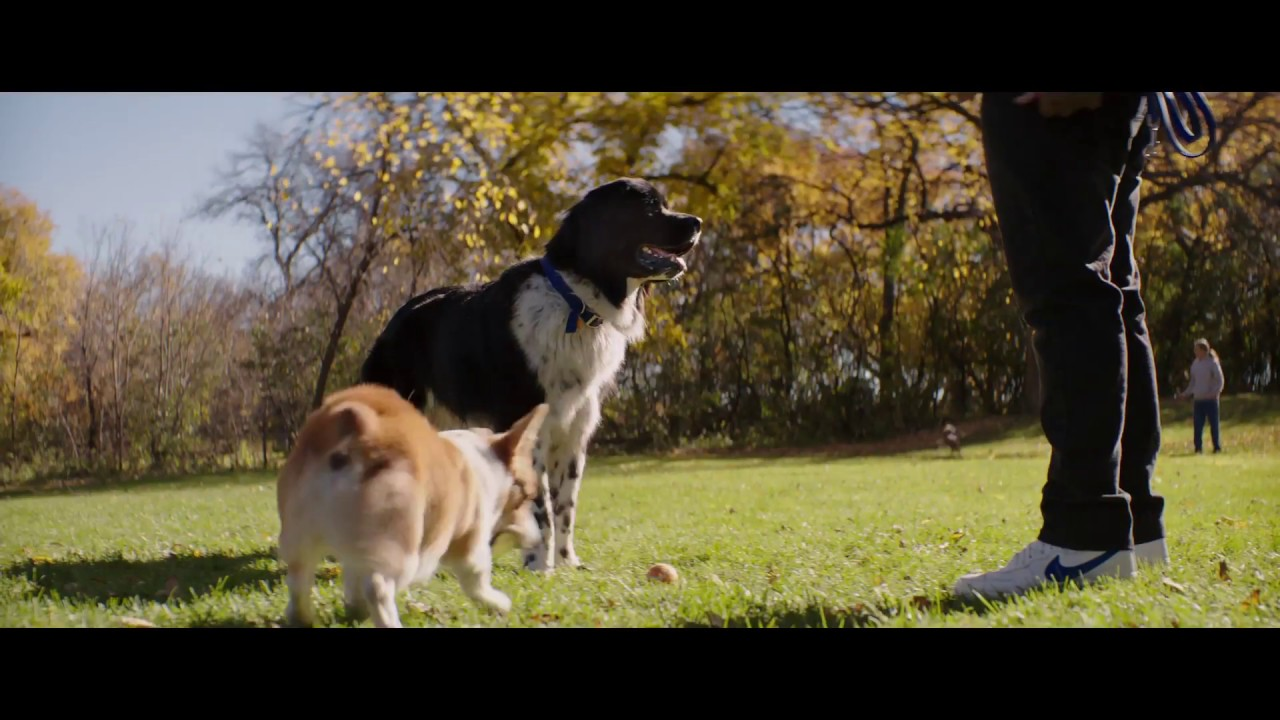 Maya A Dog S Purpose