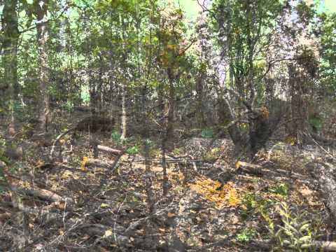 ADILABAD FOREST RANGE THLAMADUGU