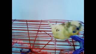 Nane Limon Kabuğu ) ;)