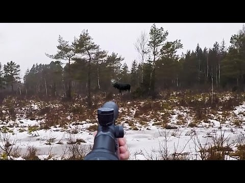 Охота #100 сборник лучших моментов на охоте